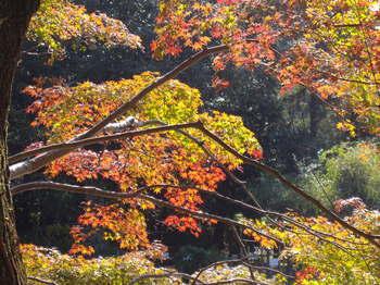 万葉植物園4.JPG
